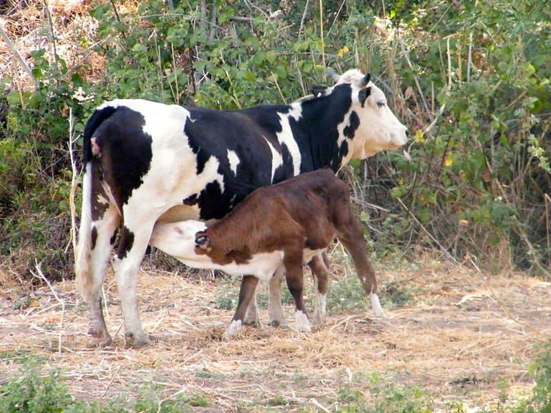לקראת שבועות: שנת 2017 והרבעון הראשון של 2018 התאפיינו בעלייה בביקוש למוצרי חלב