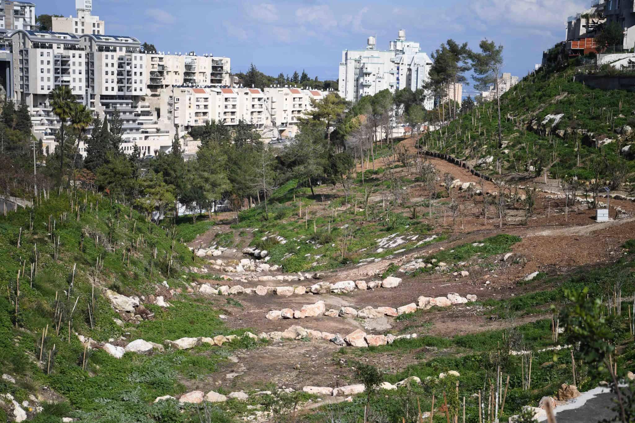 חיפה: העיר הראשונה בישראל שהצטרפה ליוזמה בינלאומית לשימור יערות
