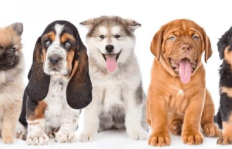 יום אימוץ כלבים בעופר גרנד קניון חיפה