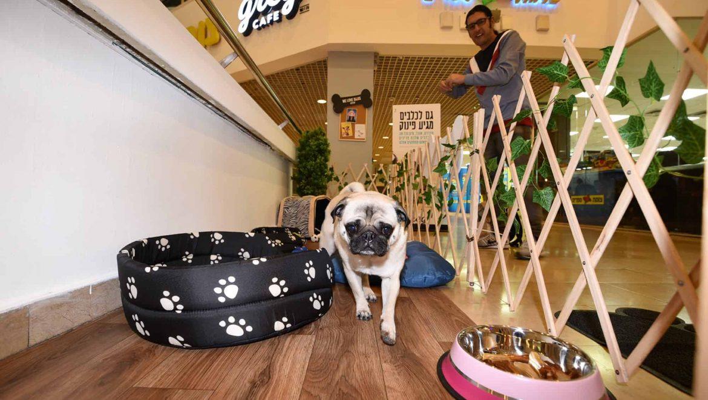 שמעתם על: בית קפה לכלבים…יש כזה!