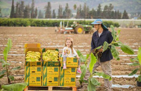 פסטיבל הבננה ה-5 בעמק הירדן
