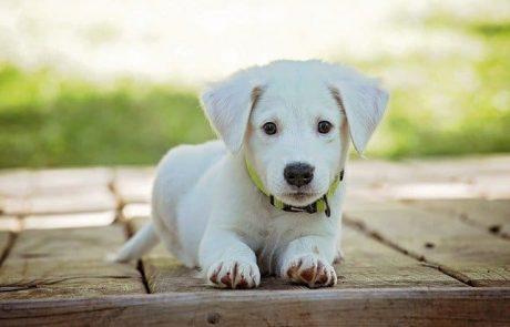 איך נדע איזה כלב מתאים לנו לאימוץ?