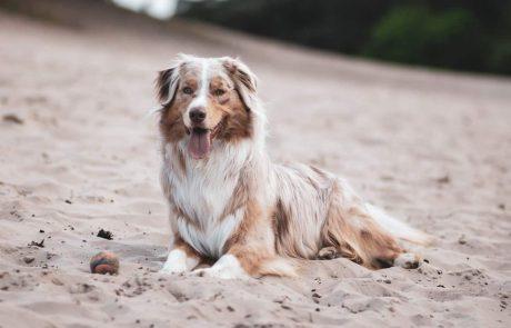 חדש: תכשיר מתקדם לכלבים לטיפול משולב בקרציות, פרעושים ותולעים