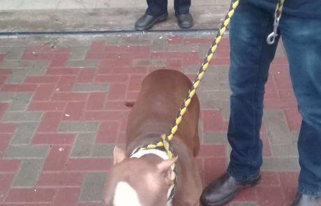 קרית ים: מבצע ללכידת כלבים מסוכנים ברחבי העיר