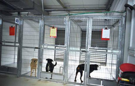 חיפה: שיא באימוץ כלבים בימי הקורונה