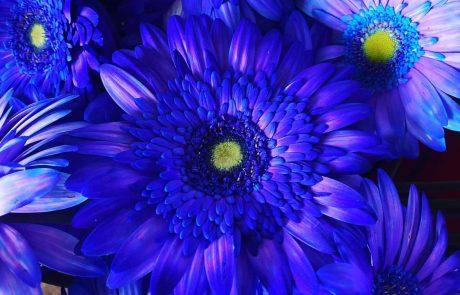 קניון עופר סירקין : נפתח מתחם פרחים ועציצים