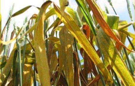 אוניברסיטת חיפה: חוקרים גילו לראשונה משפחת חלבונים חדשה בצמחים