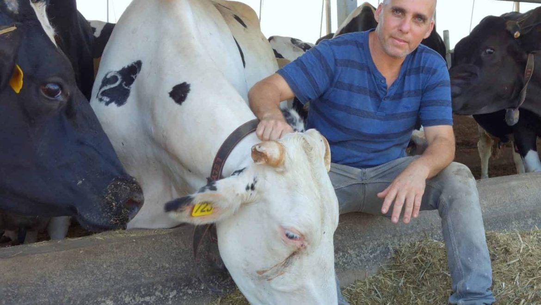 מחקר קובע: עליית מחירי החלב ב-4% אמורה להוסיף למחיר הקוטג' 4 אגורות בלבד ולמחיר המילקי אגורה וחצי.