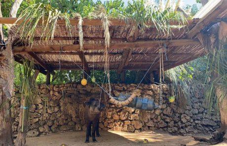 סוכות בספארי: גם החיות נהנות מסוכה…