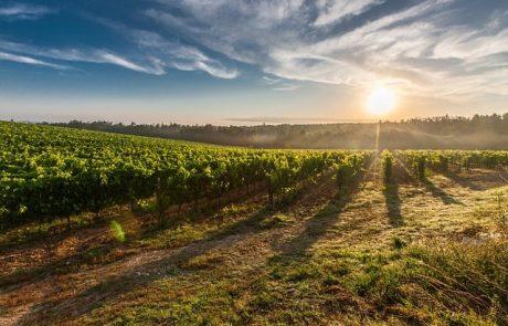 קרקע חקלאית בנימינה – למי זה מתאים?